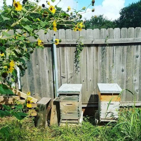 Backyard apiary (beehive)